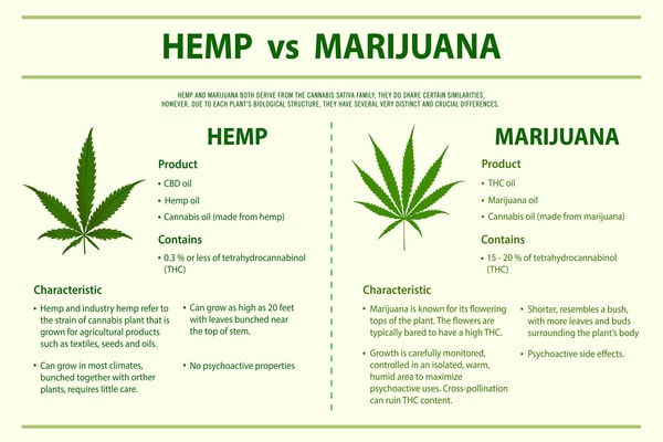 Hemp-Vs-Marijuana-Horizontal