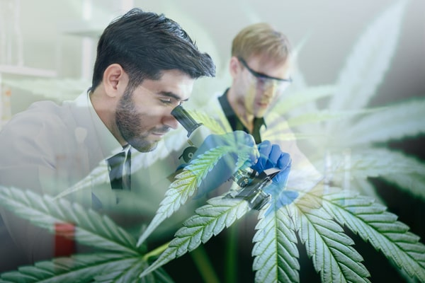 Scientist-Research-Conduct-Experiment-Cannabis-Oil